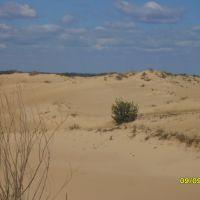 Елочка в Пустыне ..., Боковская
