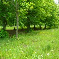 Деревья. trees, Большая Мартыновка