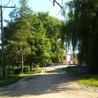 Тропинка К Школе. Path to School, Большая Мартыновка