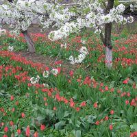 Весна в Гиганте, Гигант