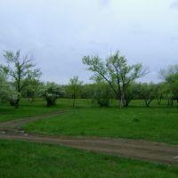 Роща водокачки, Гуково