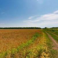 поле, Заводской