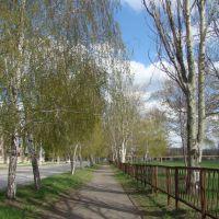 Аллейка по ул. Рижской (от ДК к школе), Зверево