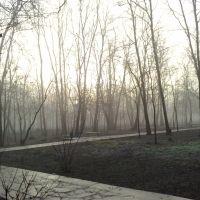 Парк в декабре, Зверево