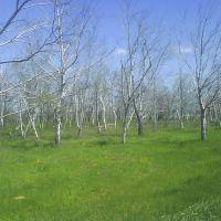 Birch, Кагальницкая