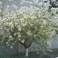 Весна..., Каменск-Шахтинский