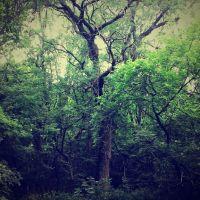 В куйбышевском лесу, Куйбышево