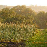 Огороды в Куйбышево, Куйбышево