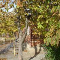 Осень на Красноармейской, Матвеев Курган