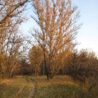 Жёлтое дерево и жёлтая дорога. Yello tree and yellow road., Тарасовский