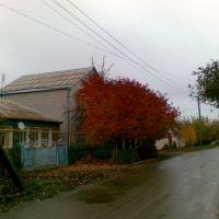 Цимлянск., Цимлянск