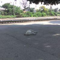 Собачка на вокзале, Шахты