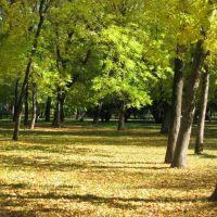 autumnal park, Шахты