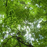 Зеленое небо темных аллей (Шишкин парк), Горняк