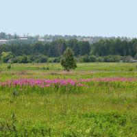 вид на Шишкинский лес, Горняк
