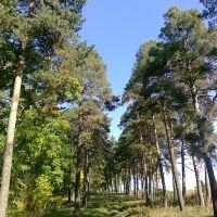 Алея в Шишинском саду, Милославское