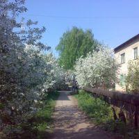 Ул. Прогресса II квартал, Рыбное