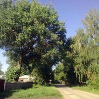 старый тополь, Ряжск