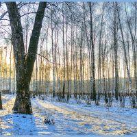 The sun, hidden behind a tree .... (Солнце, спрятанное за деревом....), Рязань