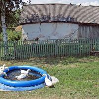 BY THE POOL - бассейн, Сараи
