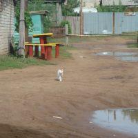 Борский кот, Борское