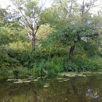 Катание по речке, Зольное