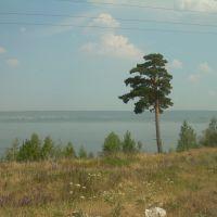 Зольное. Одинокая сосна (The lone pine), Зольное