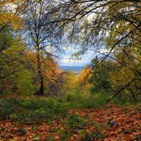 Лес, Зольное