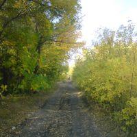 Дорога через лес, Красноармейское