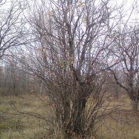 Сентябрь, красные, желтые и зеленые листья, Красноармейское