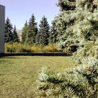 Парк около Трест-25, Новокуйбышевск
