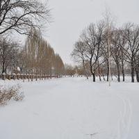 """В парке """"Дубки"""" зимой., Новокуйбышевск"""