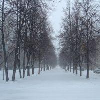 Липовая аллея на ул.Отрадной, Отрадный