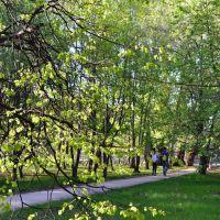 Городской парк г. Отрадный, Отрадный