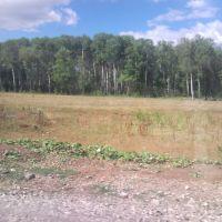 Лес, Шентала