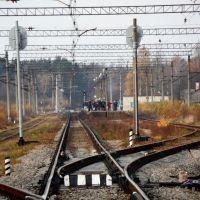 ЖД станция Большая Ижора, Большая Ижора