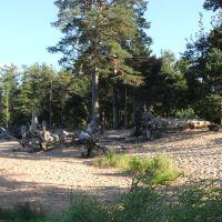 Берег Финского залива у Большой Ижоры, Большая Ижора