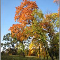 Gatchina. A mellow autumn., Гатчина