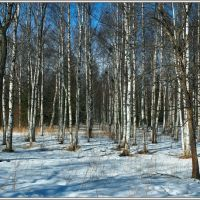Birches (www.blackred.spb.ru), Гатчина