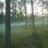 В лесу.., Дубровка