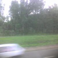 Поваленный ураганом лес. Нагорный, 08.07.2007., Дубровка