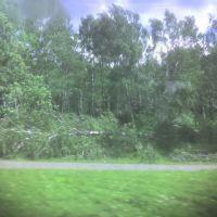 Берёзовая роща в Нагорном после урагана 08.07.2007., Дубровка