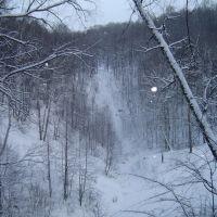 Forest, Дубровка