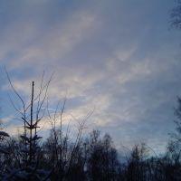 Forest 3, Дубровка