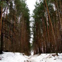 Лес в начале весны, Дубровка