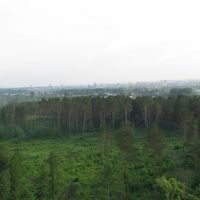 sky and forest, Дубровка