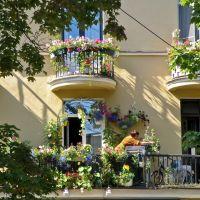 Цветы на балконе / Balcony with flowers, Зеленогорск