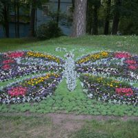 Butterfly full of flowers!, Зеленогорск