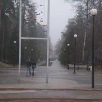 ЗЕЛЕНОГОРСК. Осенняя аллея. / Zelenogorsk. Autumn Alley., Зеленогорск