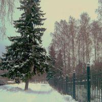 ЗЕЛЕНОГОРСК. Зимняя дорожка. / Zelenogorsk., Зеленогорск